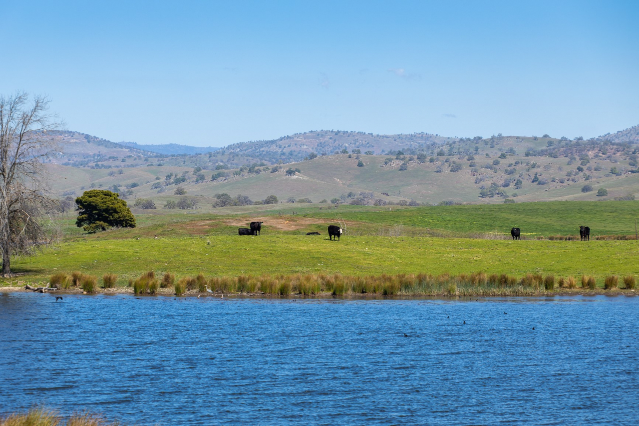 Historic Kelsey Ranch
